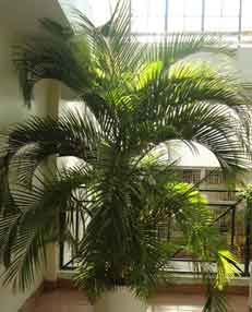 Indoor Plants Supply, Maintenance and Management